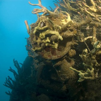 Photo from Ayesha and Wilco at Big Buddah Techical Diving, Koh Tao, Thailand