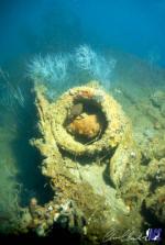 Tottori Maru fish hiding in the wreck